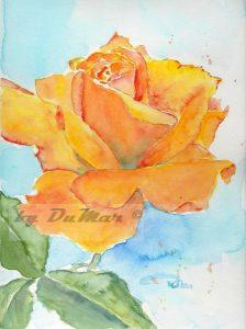 Felbe Rose